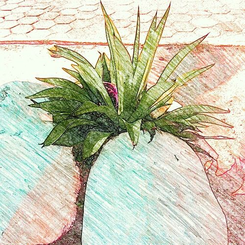 Sketch Sketch Art Picture To Drawing Life Plants 🌱 Plant