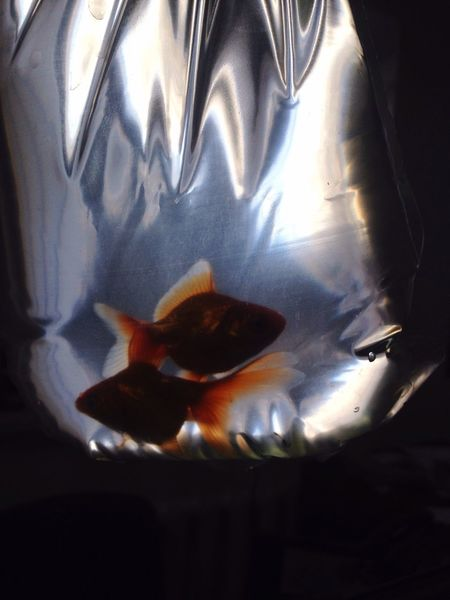 Goldfish Pic Lovestory Love Taking Photos Relaxing