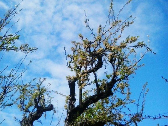 Se acaban los dias de invierno Dias De Invierno... Fotografías Urbanas Tree_collection  Working Day Primavera Naciente :D