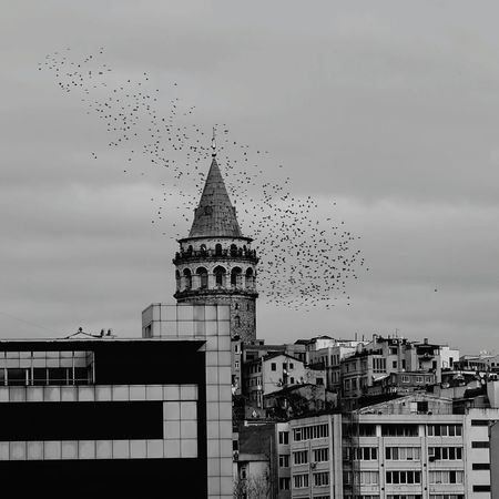 Sony Sonyalphatr Kus Haliç Galatakulesi Istanbuldayasam Istanbul_fk Istanbulda1yer Ig_fotografduragi Ggloballife Igs_world Altınkare Clik_vision Fotogulumse Fotografemekcileri Benimobjektifimden Gulumseaska EyeEm Selects Photography Zamanidurdur Analogue Photography Fotografia Hayatakarken Photo Manzara Vizorphoto Anlatistanbul Istalife_shot Business Finance And Industry Built Structure Architecture Building Exterior Flock Of Birds Bird City No People Outdoors Day Nature Cityscape Sky