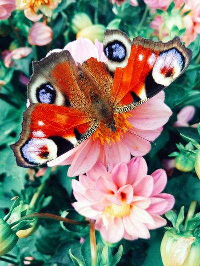Бабочка, лето, цветы First Eyeem Photo