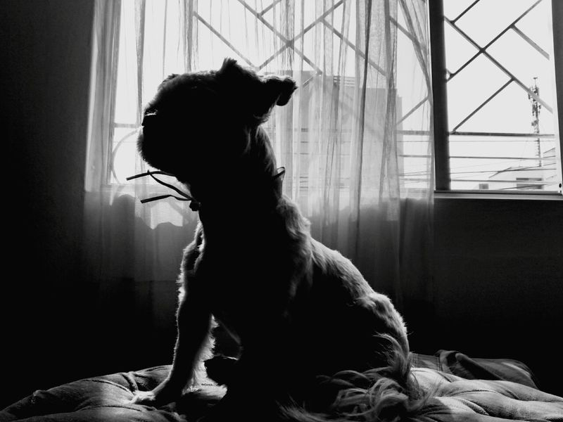 My sunshine ☺ ❤ Shadow Shadows & Lights EyeEm Best Shots - Black + White Shades Of Grey Light And Shadow Shadows & Light Blackandwhite Photography My Dogs Are Cooler Than Your Kids Dog Lover I Love My Dog Showcase: January Silhouette Popular Photos EyeEmbestshots Eye4photography  EyeEm Best Shots EyeEmBestPics