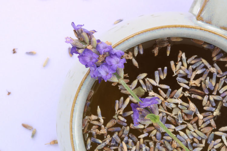 High angle view of purple flowering plants on table