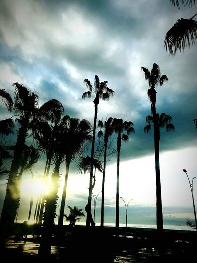Sky Cloud - Sky Silhouette Low Angle View Nature Tree Plant No People Outdoors Beauty In Nature Day Sunset Dusk Storm Sunbeam Tranquility Street Light Overcast Street My Best Photo Analogue Sound