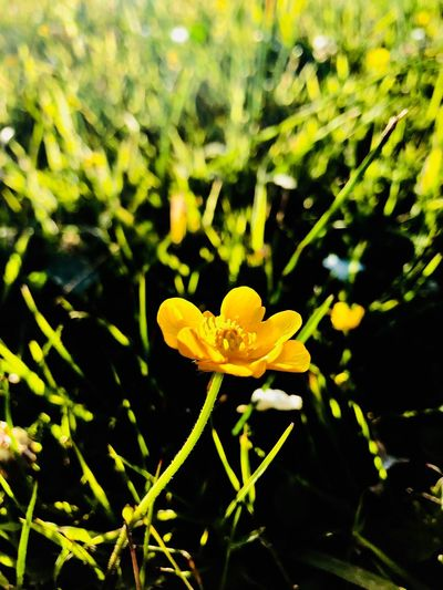 Little flower Flower Petal Nature Plant Growth Fragility Flower Head Beauty In Nature Freshness Yellow Blooming No People Day Close-up Outdoors Focus On Foreground Leaf