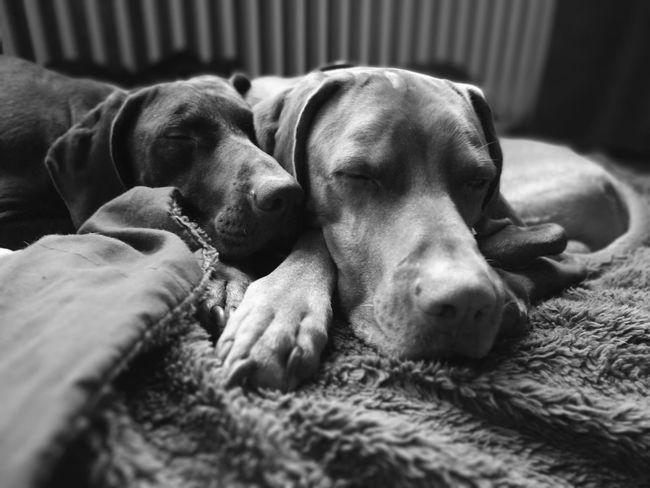 Pets Dog Relaxation Animal Themes