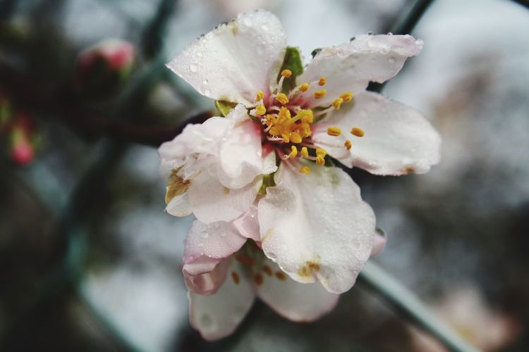 Flower Flowering Plant Plant Flower Fragility Vulnerability  Close-up Beauty In Nature Growth Freshness Petal Focus On Foreground White Color Day No People Pollen Flower Head Inflorescence Nature Tree Outdoors