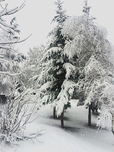 Snow Limonepiemonte Cold Good Morning Fairytale  White Enjoying Life