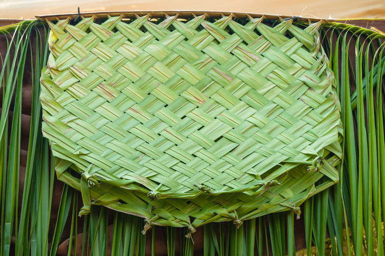 Low angle view of green leaves in basket