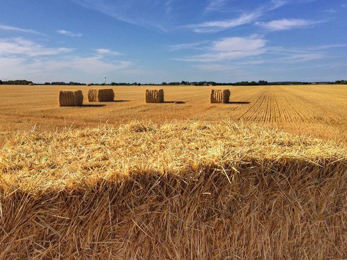 Summer Haystacks Land Landscape Sky Field Environment Agriculture Farm Cloud - Sky Bale  Harvesting Hay