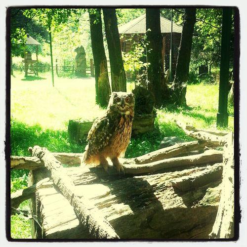 ne Eule Owl Tierpark