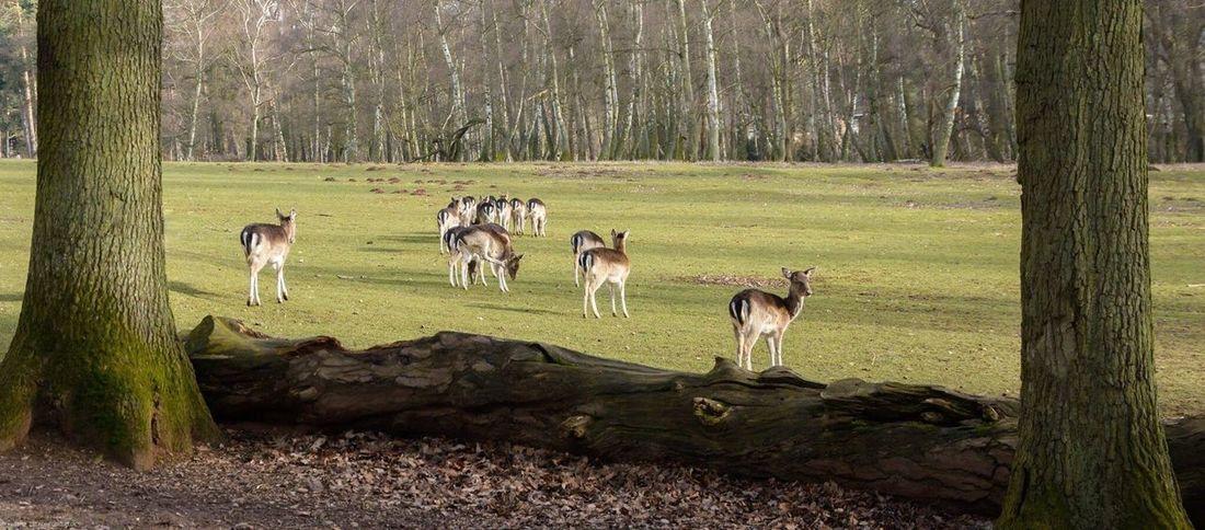Wildpark Mechernich Wildpark