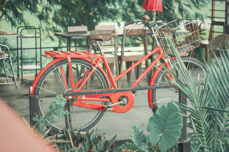 Bicycle parked by plants