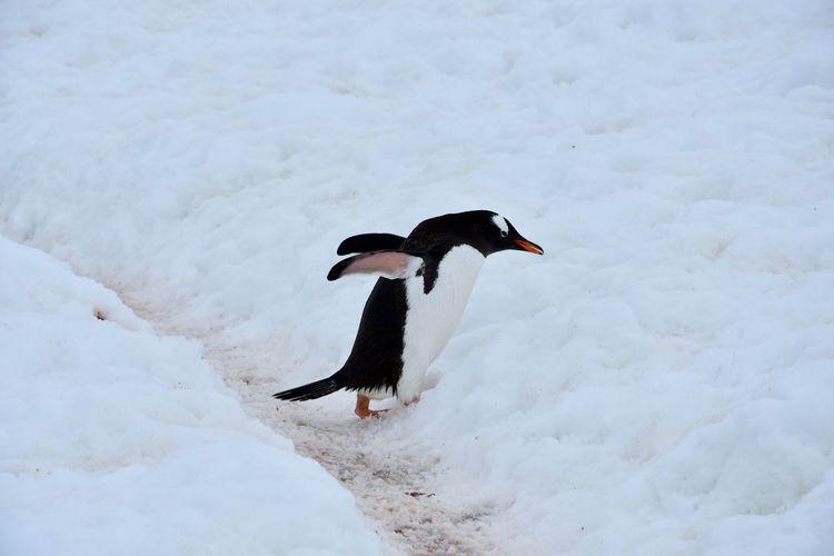 Bird on snow