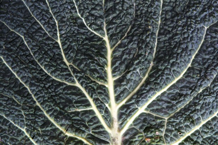 Cabbage Leaf Green Vegetable Garden