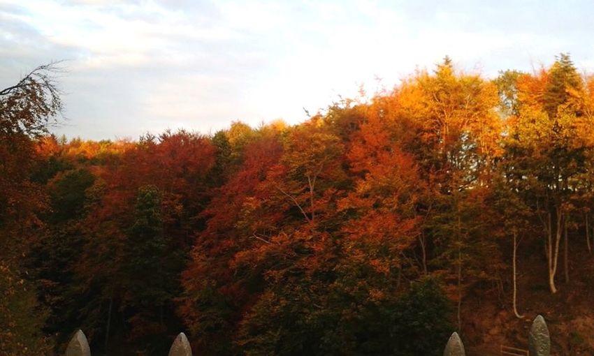 Stunning autumn