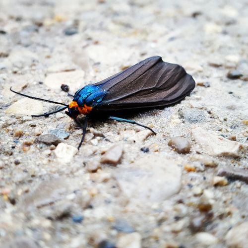Moth Nature Insect Insect Photography Check This Out Taking Photos Texture Planet Earth Hello World Bugslife Concrete Countryside Followme Ontario, Canada Close-up Blue Batwings