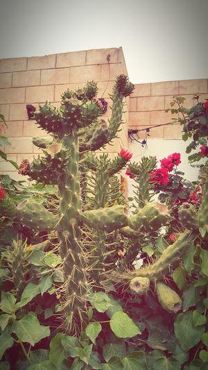Plants Naturelovers