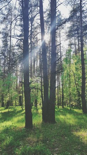 Life Foret Forets Moment Green Green Color Opening Day Beautiful Life Love ♥ Лес лес и природа зеленый Солотча Рязань Nature Nature Photography Naturelovers Natural Beauty Image Soleil