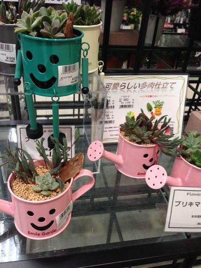 Cactus Day Flower Shop Flower Shop Japan Flowers Japan Freshness Leaf Nature No People Outdoors Plant Potted Plant Table