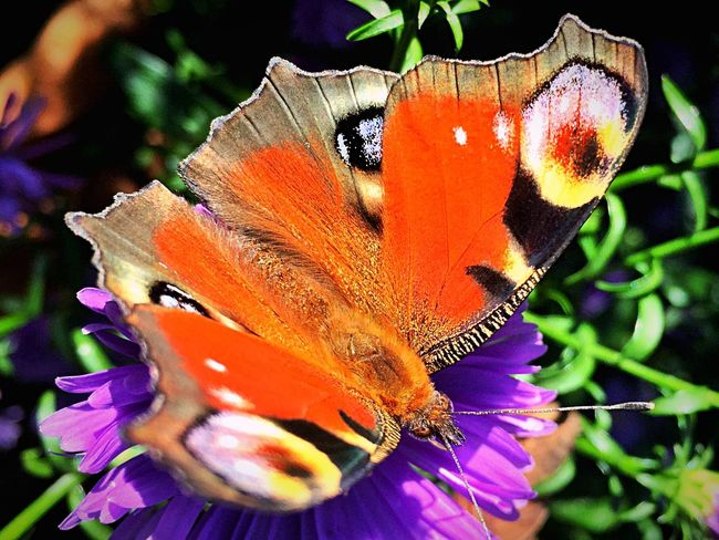 Baterfly Beauty In Nature Nature Day Flower Vibrant Color by iPhone Insect Insect Photography By IPhone Insects  Insects Beautiful Nature Baterfly,