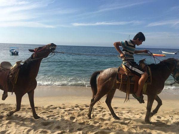 Sea Beach Horizon Over Water Horse Real People Lifestyles Domestic Animals Day Vacations Mode Of Transport Live For The Story