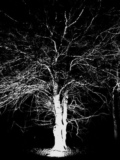 Bw Forest Tree