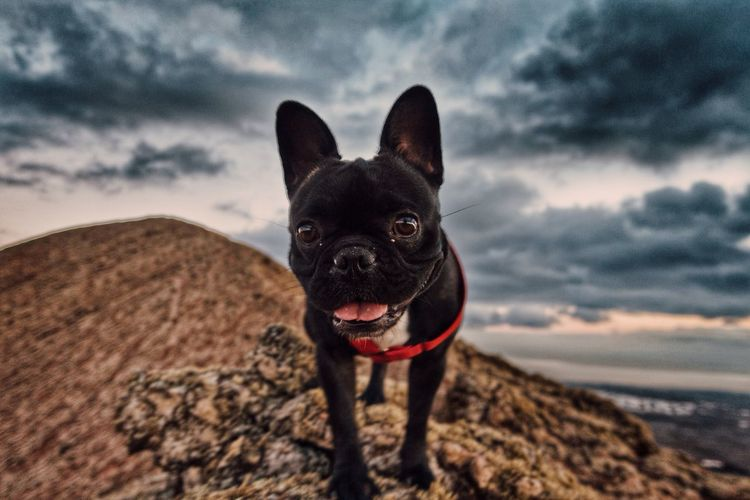 Close-Up Of Dog On Rocks Against Cloudy Sky