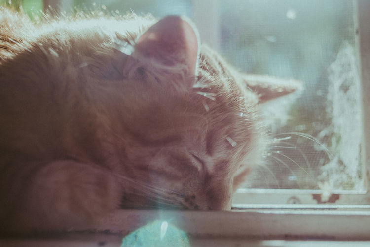 Mammal Cat Domestic Cat Animal Feline Domestic Animal Themes Pets Domestic Animals Window One Animal Vertebrate Glass - Material Relaxation Close-up Whisker No People Indoors  Eyes Closed  Transparent