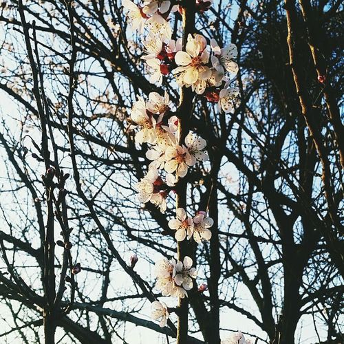 Весна , солнце,