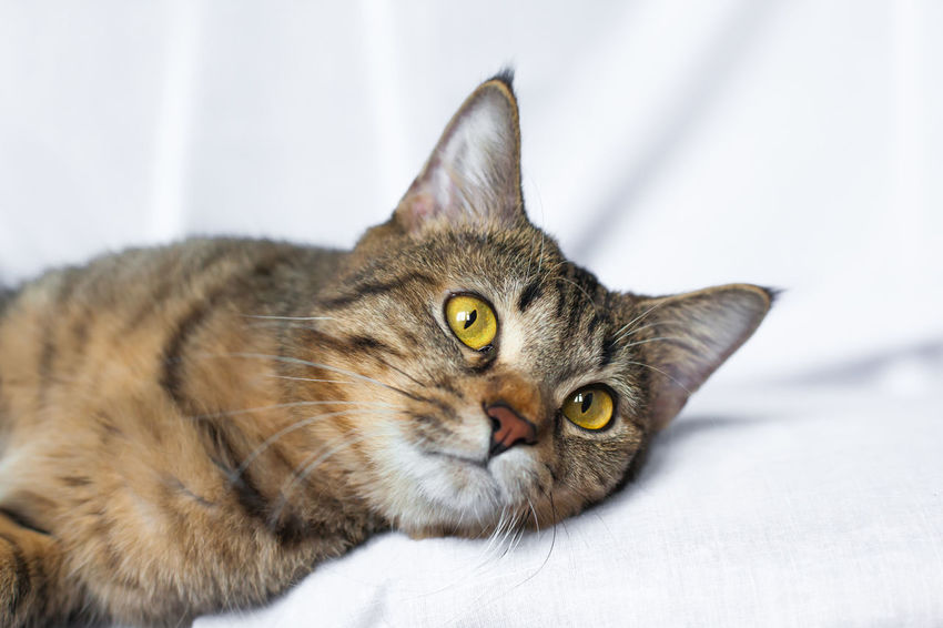 Animal Themes Close-up Day Domestic Animals Domestic Cat Feline Indoors  Looking At Camera Mammal No People One Animal Pets Portrait Tabby Cat Whisker Yellow Eyes Взгляд  кот Котик котэ лежит пушистый