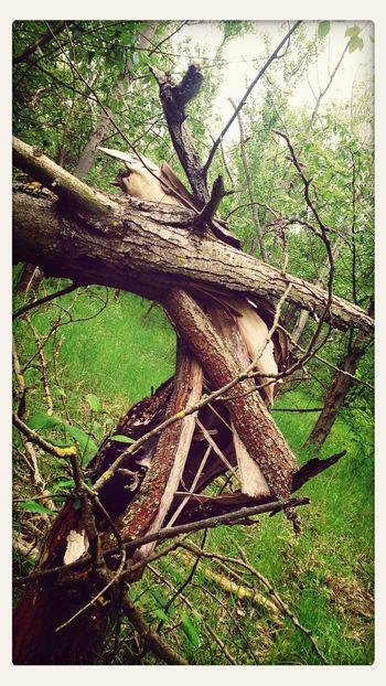 crashed wood