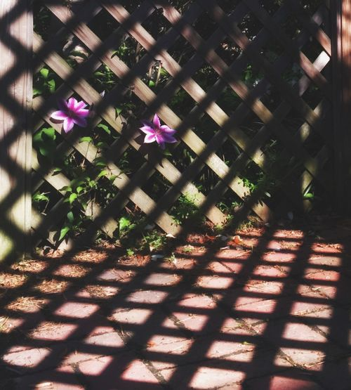 Flowers Light And Shadow Lattice Morning IPhoneography IPSShadows