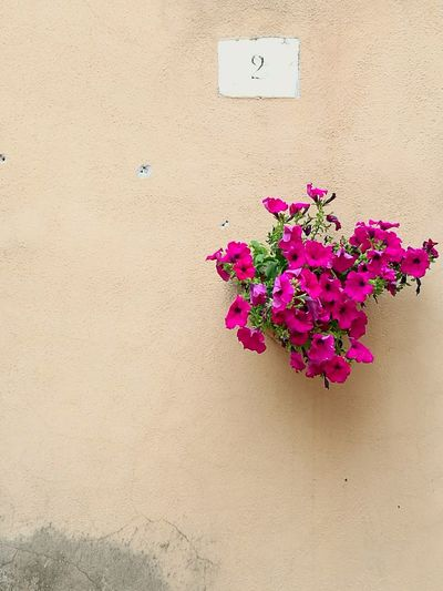Close-up of pink flowers against wall