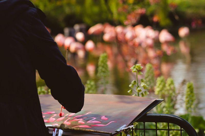 Zeichnung von Flamingos Flamingo Art Kunst Zeichnung  Tiere Zoo Human Art Amsterdam Amsterdam Art Fotography Fotografia Nature Fokus Kamera Camera Foto