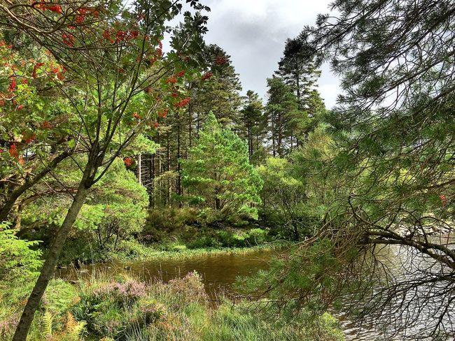 North Wales LYNN Lake View Snowdonia