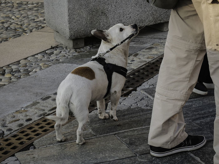 Low section of man standing with dog