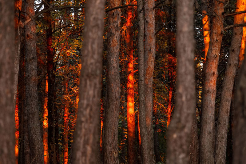 Close-up of autumn trees in forest