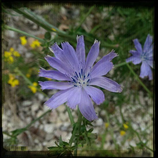Relaxing Flower