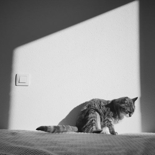 Cat resting on bed