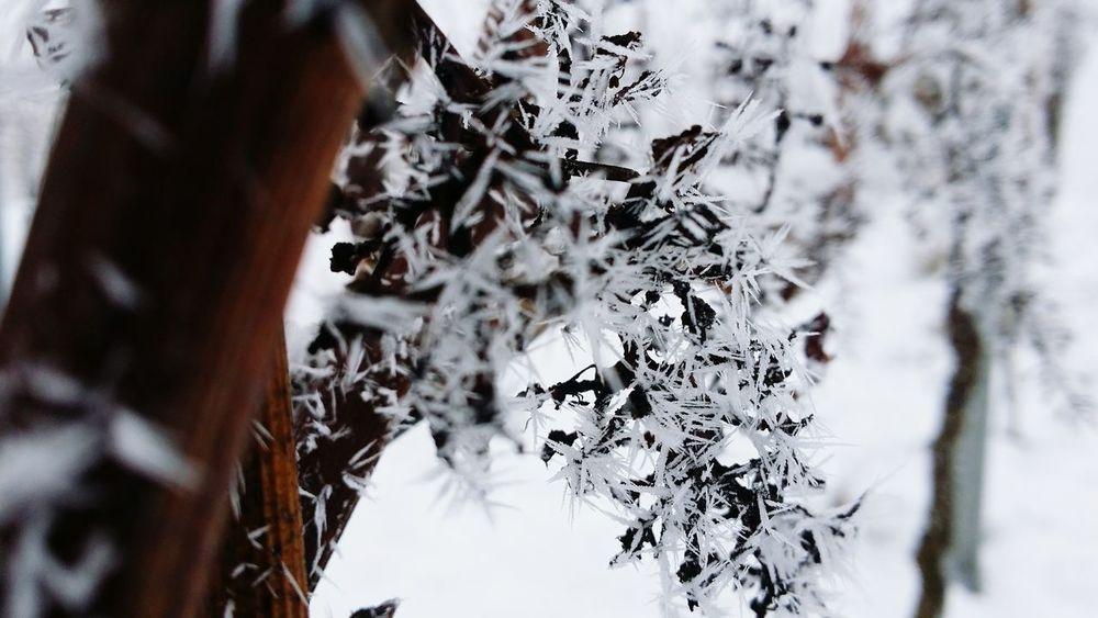 Ice Winter First Eyeem Photo Trauben Frost