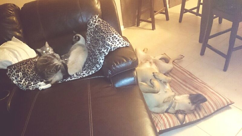 Lazy bums