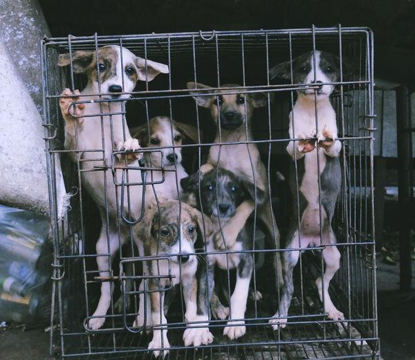 Animal Themes Cage Day Domestic Animals Indoors  Livestock Looking At Camera Mammal Metal No People Pets Pet Portraits