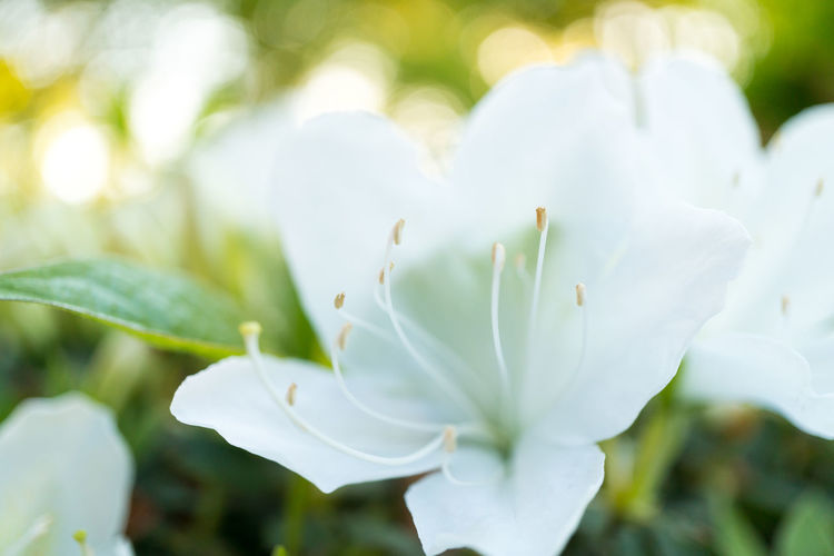 Beauty In Nature Close-up Day Flower Flower Head Focus On Foreground Fragility Freshness Growth Nature No People Outdoors Petal Plant Tree White Color