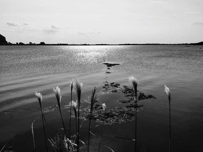 At Jeju Ole il gil in Jeju island, Korea IPhoneography Monochrome Black & White JEJU ISLAND  Korea Landscape_bw From My Point Of View Seaside Light And Shadow EyeEm Best Edits