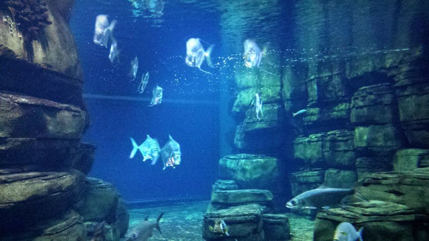 Fishes Close-up Water Night Beauty In Nature Aquarium Nature UnderSea No People Underwater Swimming Sea Life Animal Themes Blue Beauty