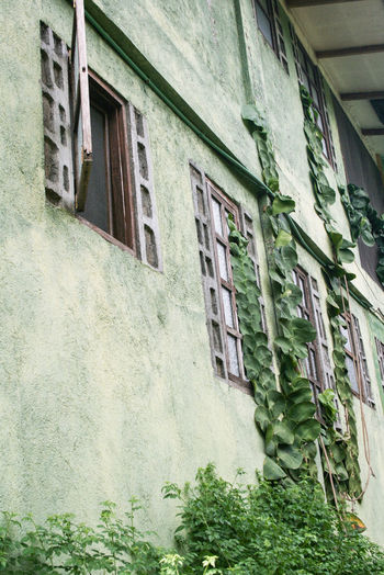 Architecture Building Exterior Built Structure Day Exterior Green Color Growth House Low Angle View Nature No People Outdoors Philippines Plant Residential Building Residential Structure Sky Wall - Building Feature Window