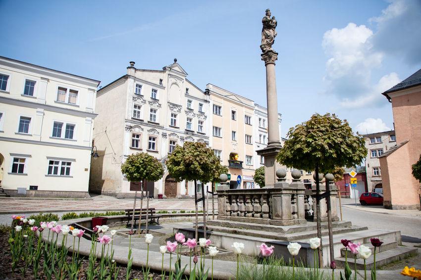 City Poland Polska Mariensäule Public Green Radków Sculpture Tulpen