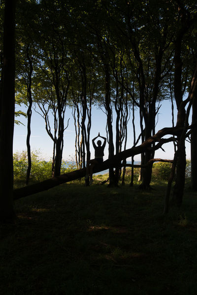 Branch Day Gespensterwald Men Nature One Person Outdoors People Relax Relaxing Sea Sky Tree Trees Yoga Yoga Pose