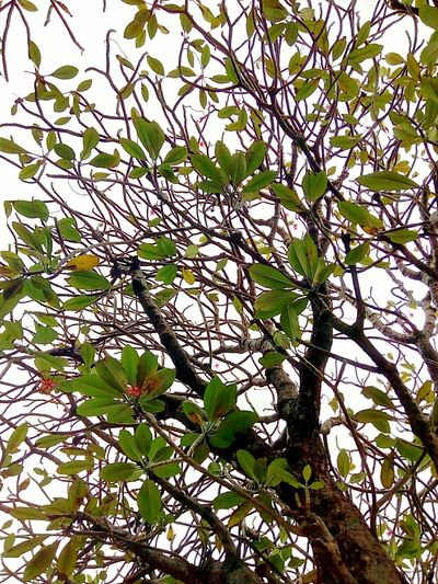 Tree Tree_collection  Leaf Leaves Leaf Collection Leaves Collection Leaves Color Leaf Color Tree Art Beauty Of Tree Patterns Pattern Pattern Of Tree Tree Photography Creative Color Creative Color On Leaves Creative Creative Photography Beauty Of Nature ใน Bangkok, Thailand